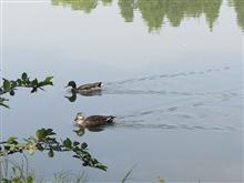 杭州游西湖